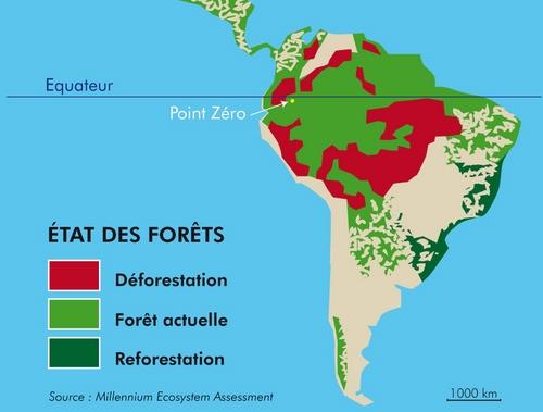 Territoire forestier : L'amazonie