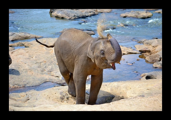 Photo du Sri Lanka avec un bébé éléphant